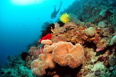 Taucher am Korallenriff - Tauchsafari Philippinen