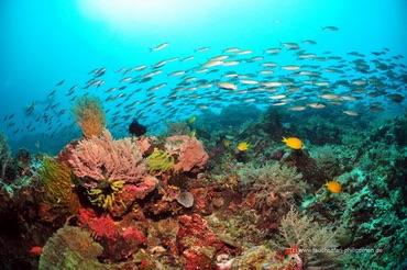 Des récif intactes, localisés dans le triangle coralien.