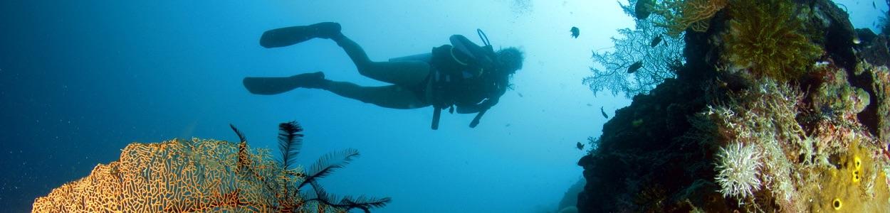 Un plongeur en explorant un des multiples plongées mur selon notre safari de plongée aux Philippines.