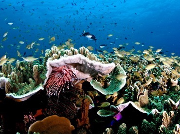 Un récif en toutes couleurs pendant votre croisière de plongée.