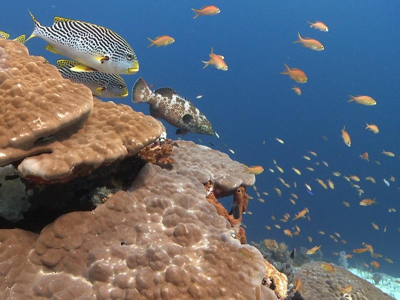 Des coraux durs et ses poissons de récif pendant une des plongées de safari aux Philippines.